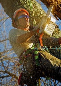 Jeff Bergman, Owner & ISA Certified Arborist®