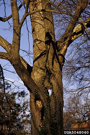 architectural-pruning