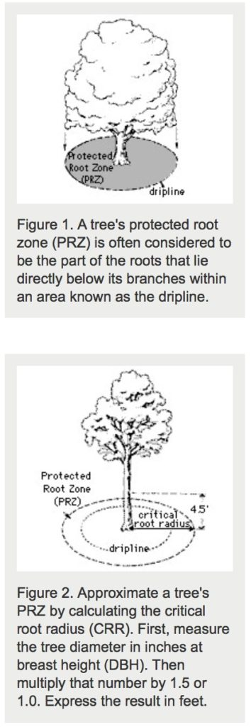 Protected Root Zone and Dripline